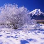 ザリガニの飼育に疑問!冬眠するの?冬の越し方と適切な水質温度は?