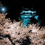 お花見の時期は?愛知県で子供が喜ぶ屋台の出るスポット2016