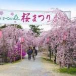 お花見の時期は?岡山で子供が喜ぶ屋台の出るスポット2016