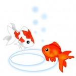金魚が藻、苔、水草を食べるのは大丈夫?水槽内の藻の増やし方と抑制対策は?