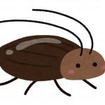 部屋を掃除していたら虫が!怖い虫の対処法と予防法!ゴキブリ、クモ、ムカデを撃退!